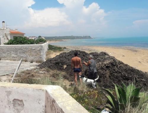 Rifiuti sversati su spiaggia Triscina. Scatta interrogazione M5S all'Ars