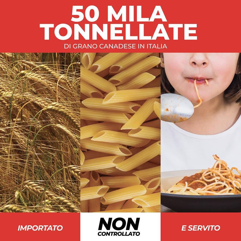 50 mila tonnellate di grano duro canadese sbarcato in Italia