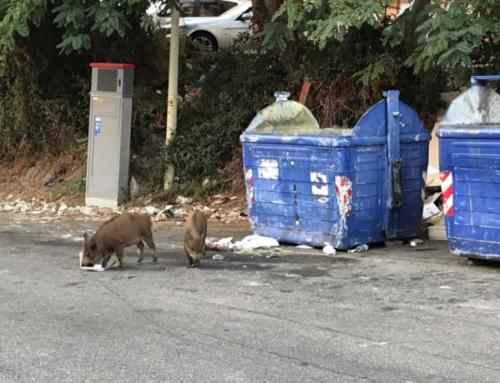 """Controllo fauna selvatica, allarme M5S: """"Norma illegittima a rischio proliferazione dei cinghiali"""""""