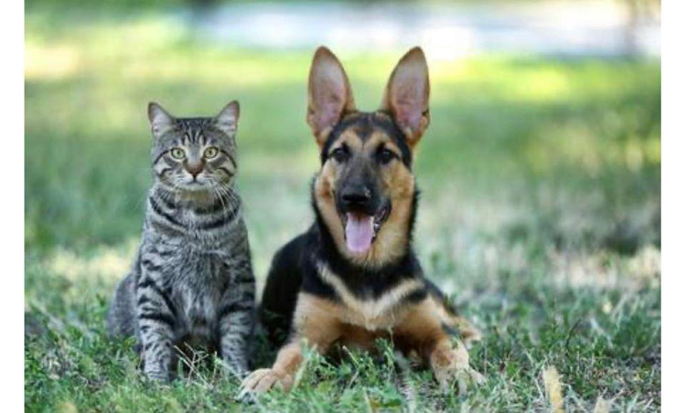 Spostamenti di necessità, cura animali da affezione