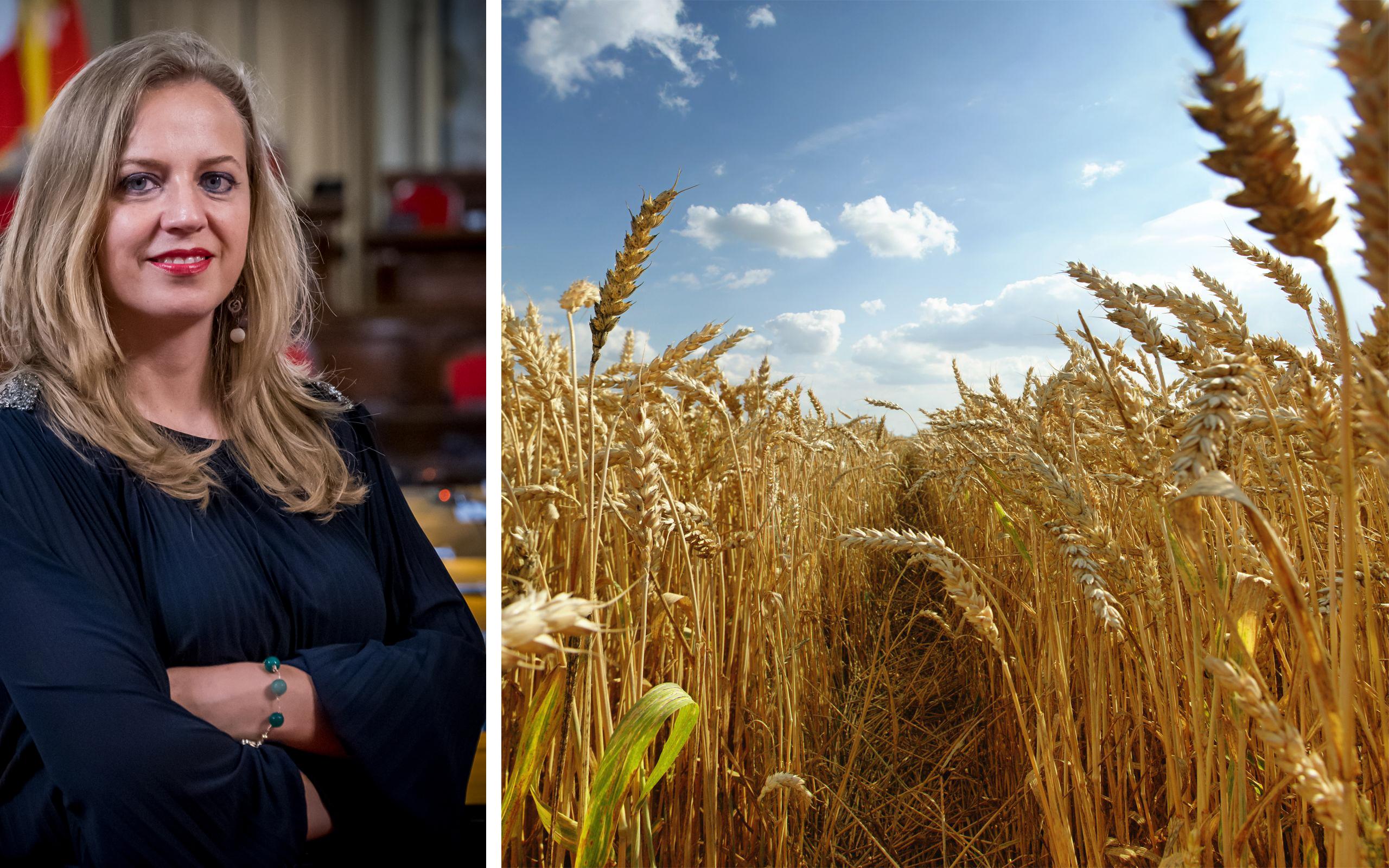 """Attiva Sicilia a Musumeci: """"Maggiori controlli sul grano importato, necessario tutelare la produzione siciliana"""""""